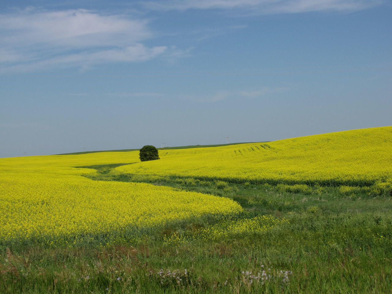 field, landscape, tranquil scene, tranquility, nature, beauty in nature, grass, no people, agriculture, day, scenics, outdoors, green color, growth, yellow, sky, rural scene