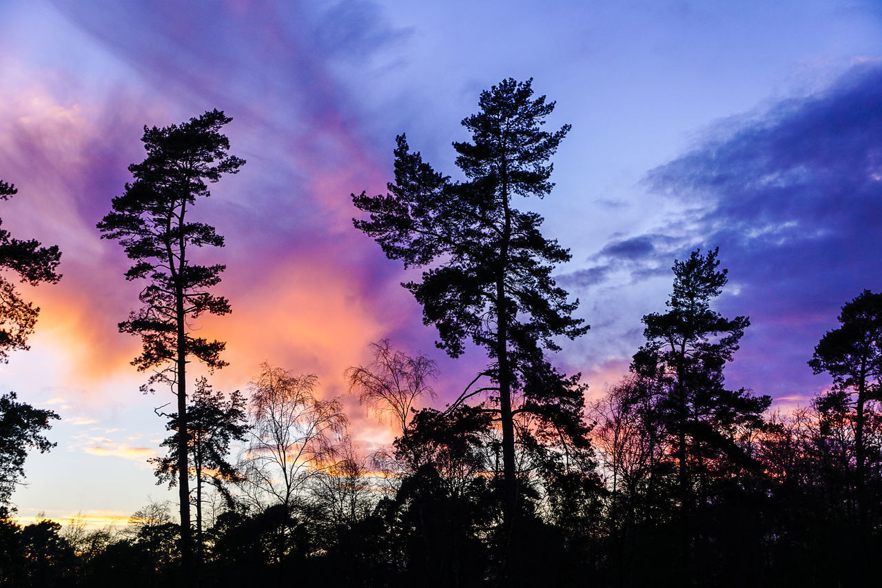 Sunset over Mare Hill Common in Witley in Surrey. Beauty In Nature Cloudscape Conifers Day England Godalming Growth Heathland  Low Angle View Mare Hill Common Nature No People Outdoors Scenics Silhouette Sky Sunset Surrey Surrey Countryside Surreyhills Tranquility Tree Uk Witley WoodLand