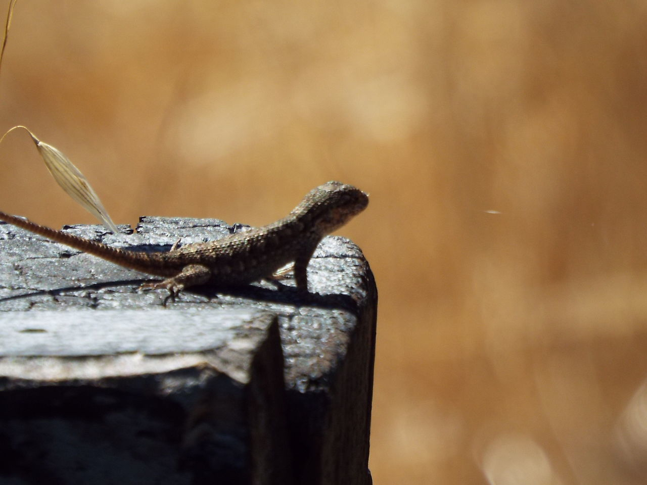 one animal, animals in the wild, animal themes, animal wildlife, day, reptile, outdoors, no people, focus on foreground, close-up, nature, full length