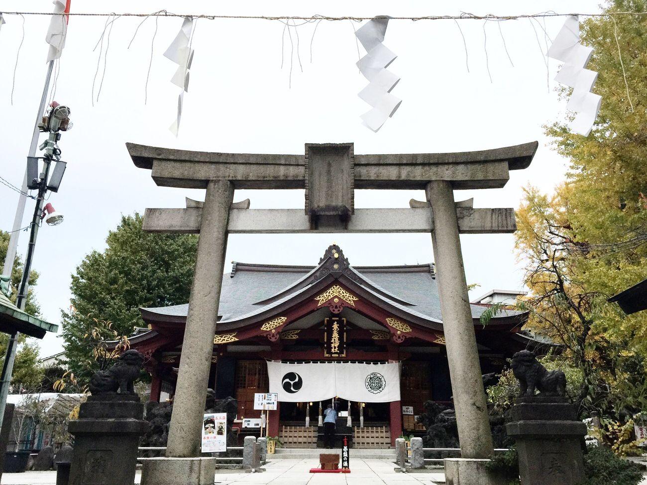 2016.11.16 東京都 荒川区 素盞雄神社