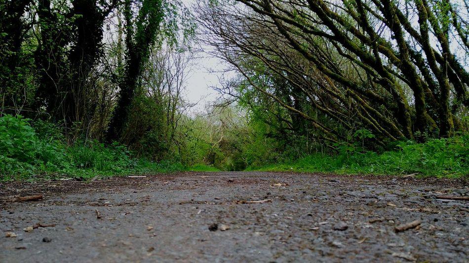 Ireland Ireland_gram Discovering Ireland Walk Walk This Way Running Thegearagh Macroom Cork Nature Nature Photography Lovely Peace Peace And Quiet Picture Pic Picoftheday #photooftheday #photography #iphonesia #pikturdis #WeAreTheCulture #jj_forum #webstagram #world #streetstyle #shootinupny #statigram #randomfreshness #tbt #twitter #nycphotography #nyc #les #igdaily #everybodystreet #vsco #streetphotography #s