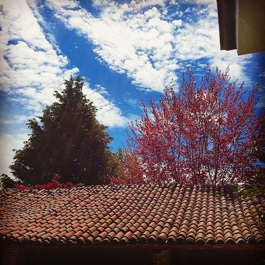 Dopo la pioggia ritorna sempre il Sole e oggi più che mai. Limpido Cielo azzurro tra le Nuvole . Speranza Aftertheraincomesthesun Trees Verde Bianco Rosso Azzurro Blue Sky Clouds Sun