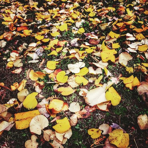 Colorful day ! Autumn Autumn Colors Leaves Amazing Nature Grateful Happy IPhoneography