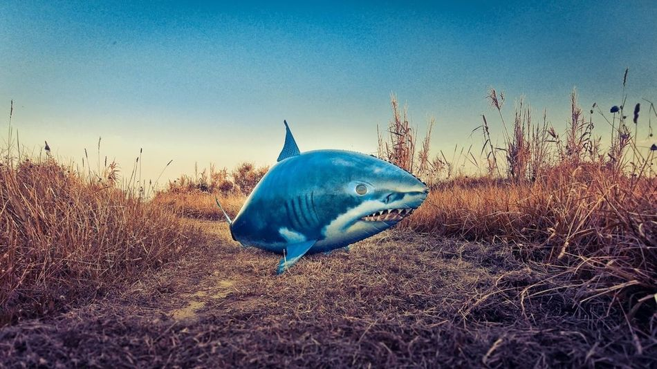 Beautiful stock photos of shark, Animal Representation, Blue, Childhood, Clear Sky