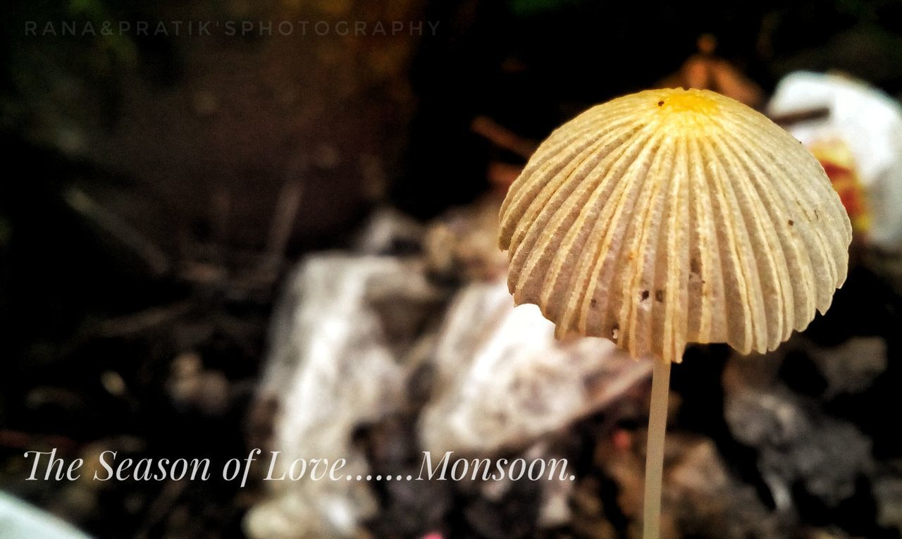 focus on foreground, close-up, mushroom, no people, outdoors, nature, toadstool, day