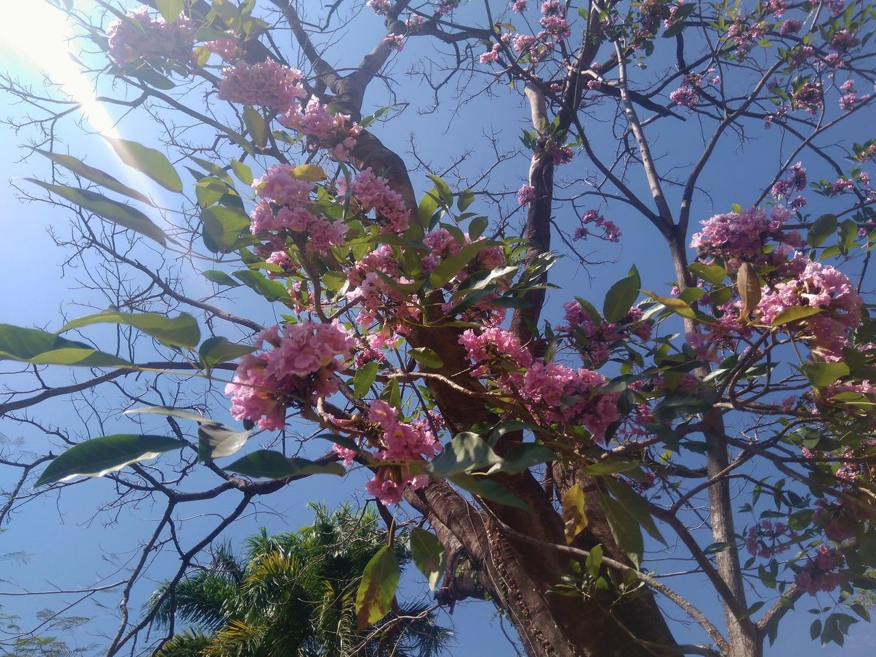 Hermosa creacion de Dios 🌼💮🌸 Tree Growth Nature Low Angle View Pink Color Sky Outdoors Close-up Fragility Flower Freshness Beauty In Nature Branch No People Day EyeEm EyeEm Gallery F4F Folllw4folllw