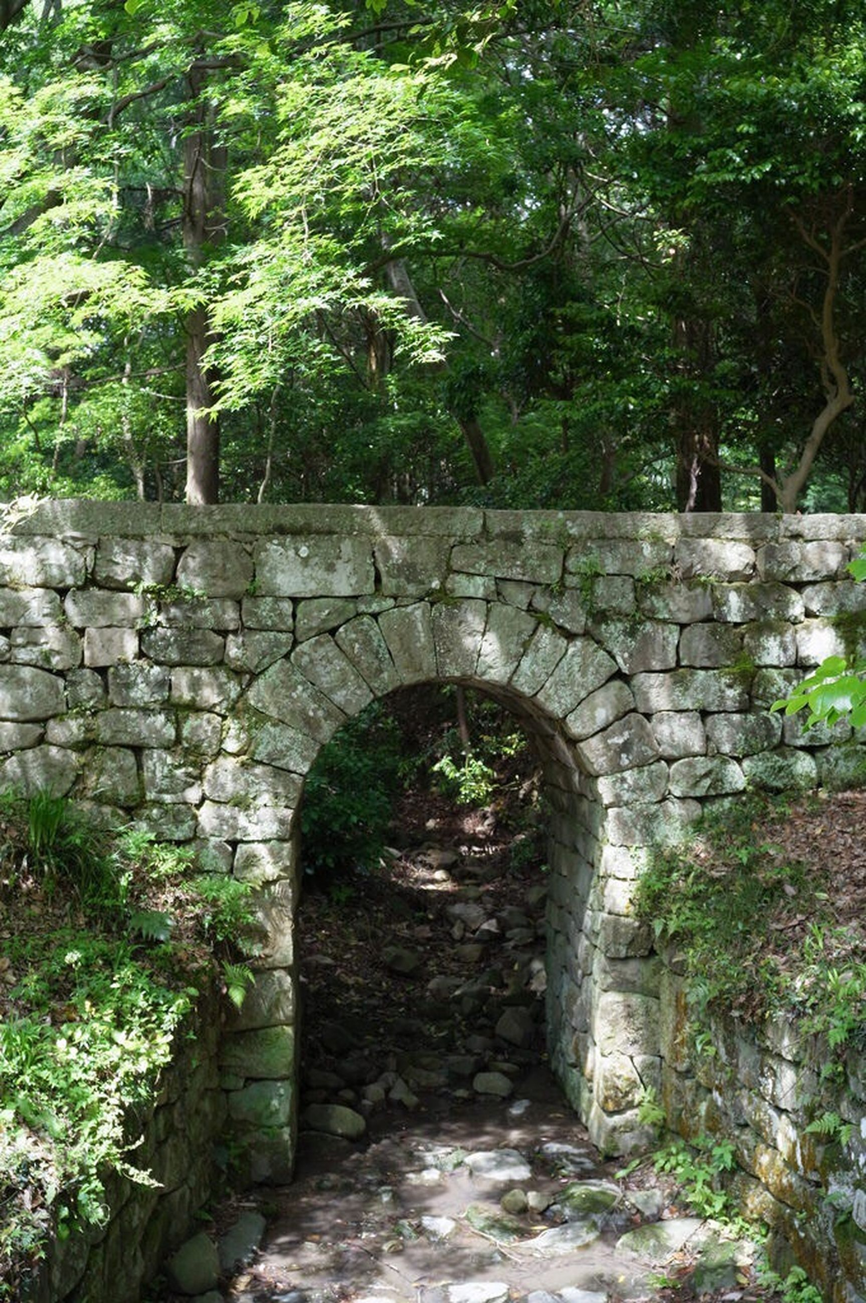 architecture, built structure, arch, stone wall, old, tree, archway, plant, the way forward, wall - building feature, building exterior, abandoned, entrance, brick wall, growth, tunnel, day, steps, wall, no people