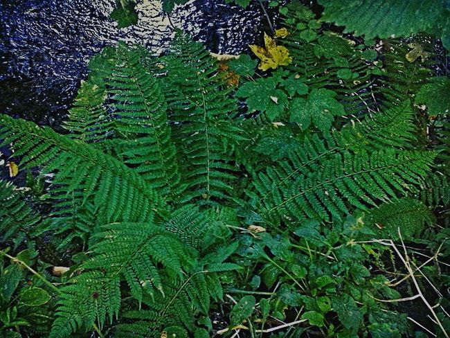 Fern Brook Out Walking Foliage Green Green Green!  Waterfront Leaves🌿