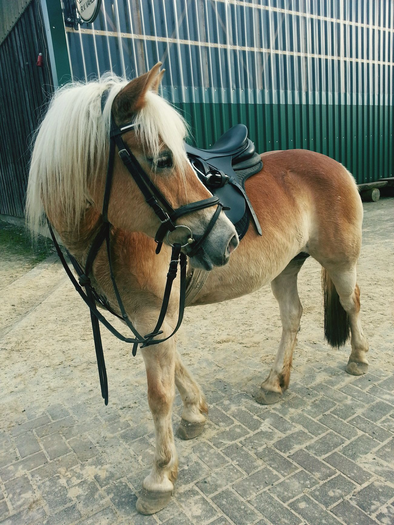 My Horse♡ Sportpferd First Eyeem Photo