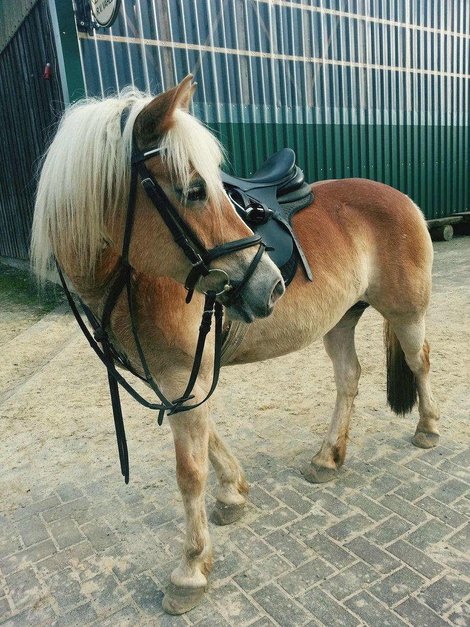 My Horse♡ Sportpferd First Eyeem Photo