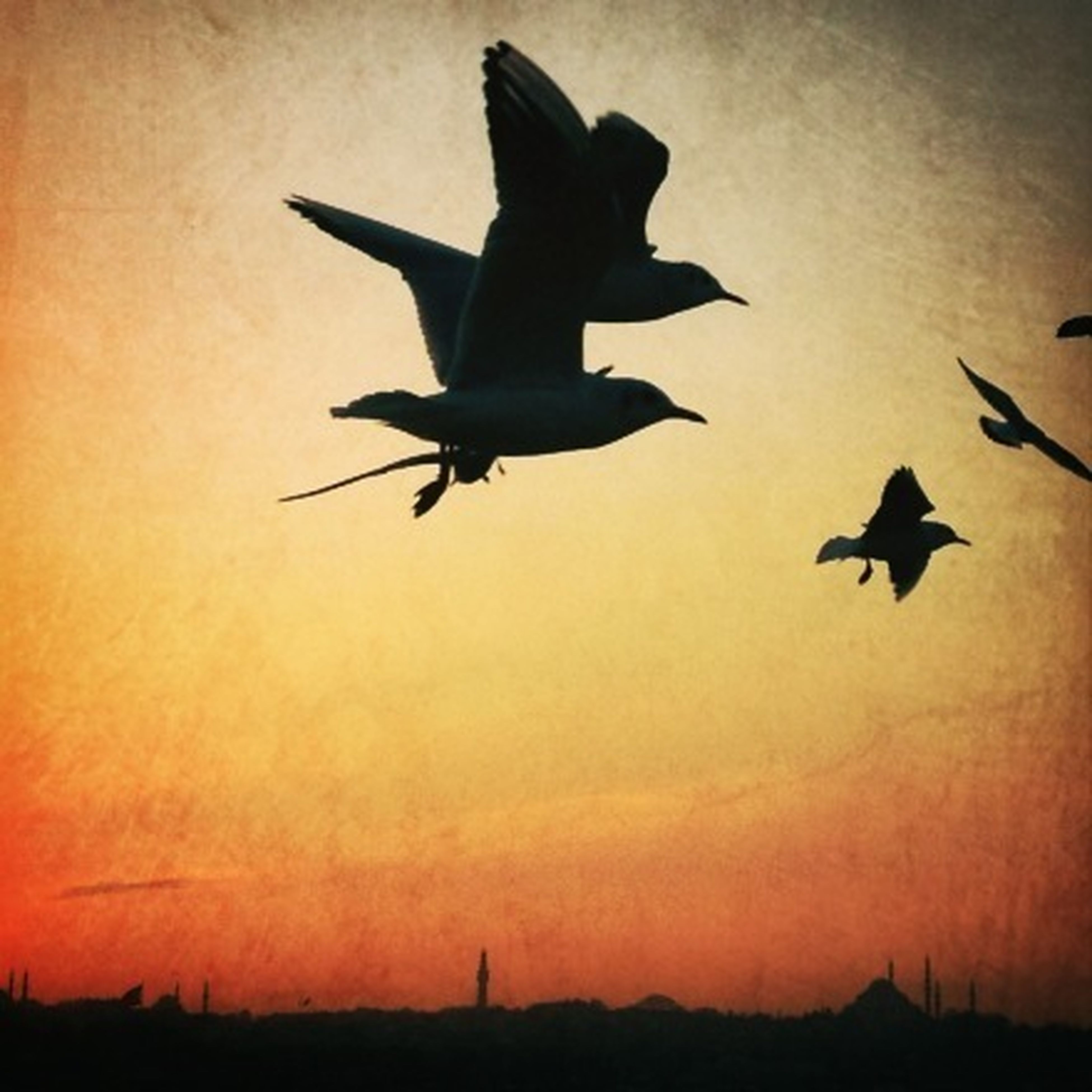 bird, flying, silhouette, animal themes, spread wings, sunset, animals in the wild, low angle view, wildlife, mid-air, sky, one animal, orange color, nature, beauty in nature, dusk, outdoors, full length, no people, outline