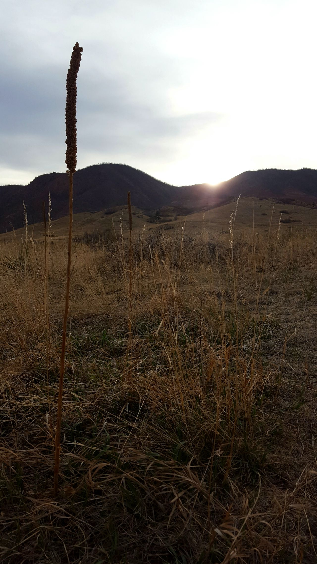 Nature Landscape Spring Outdoors Beauty In Nature Cloud - Sky Sky Day No People Light Near Focus Plant Sunset Sunlight Sunbeams TheGreatOutdoors Trail Optoutside Mountain The Rocky Mountains Foothills Foothills Of The Rockies Colorado Simplicity Greettheoutdoors