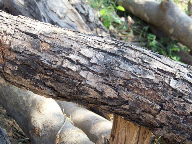 Beautiful log of wood in between forest Bark Beauty In Nature Brown Close-up Log Nature Tree Tree Trunk Wood Wood - Material WoodLand