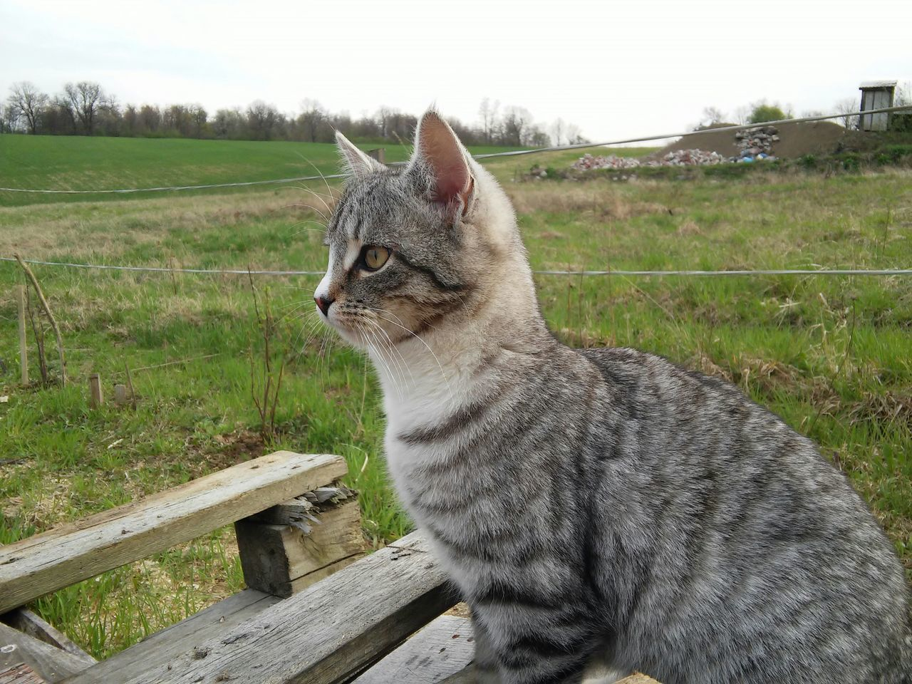 Cat Poland Cats Cute