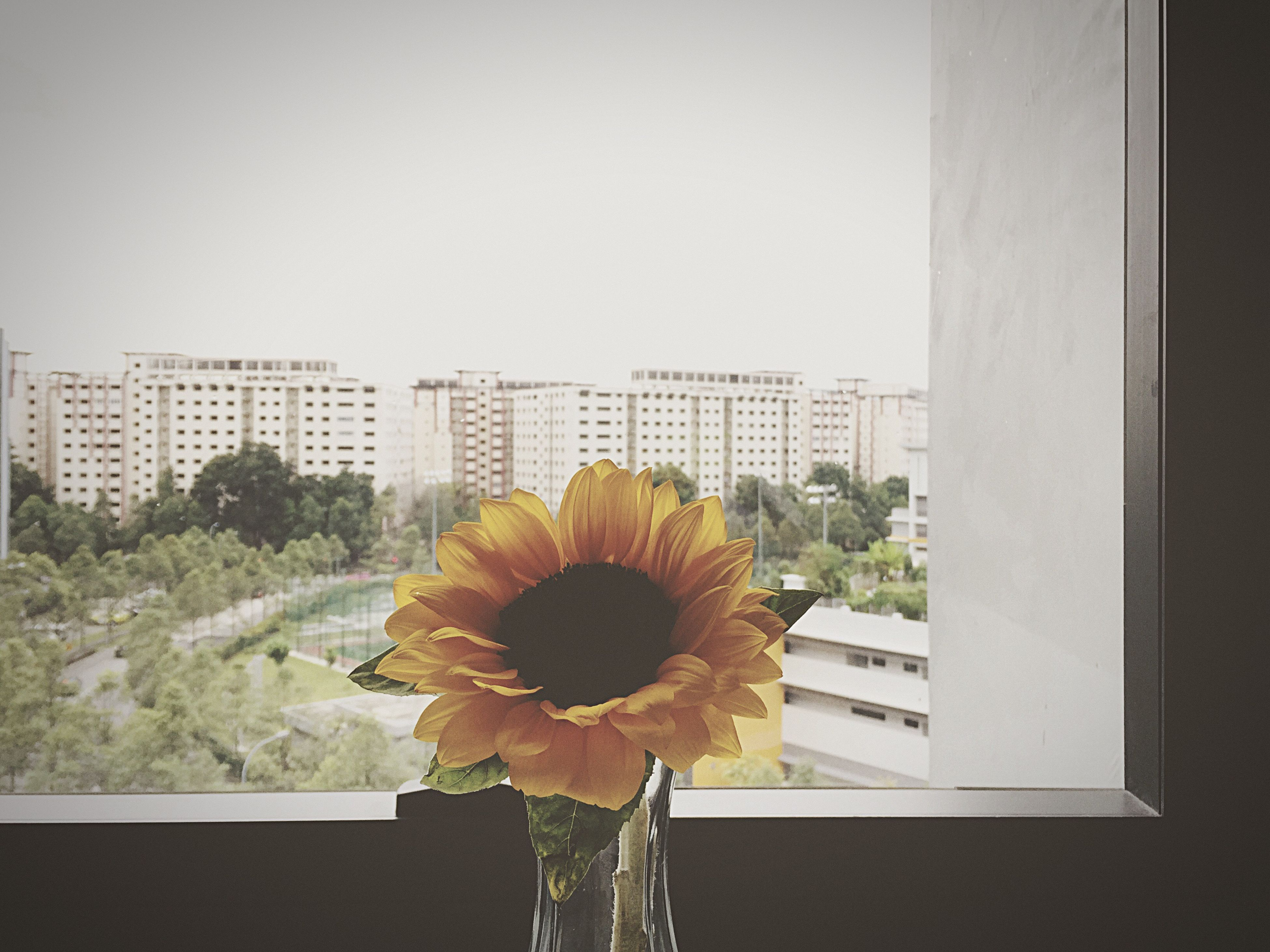 flower, architecture, built structure, building exterior, indoors, window, growth, freshness, plant, fragility, glass - material, city, flower head, potted plant, day, yellow, building, home interior, no people, petal