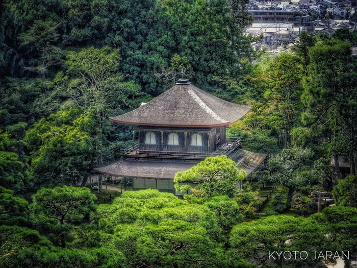 Architecture Tree Built Structure Growth Green Color No People WoodLand Lush Foliage Tourism Kyoto,japan Nikon D3100