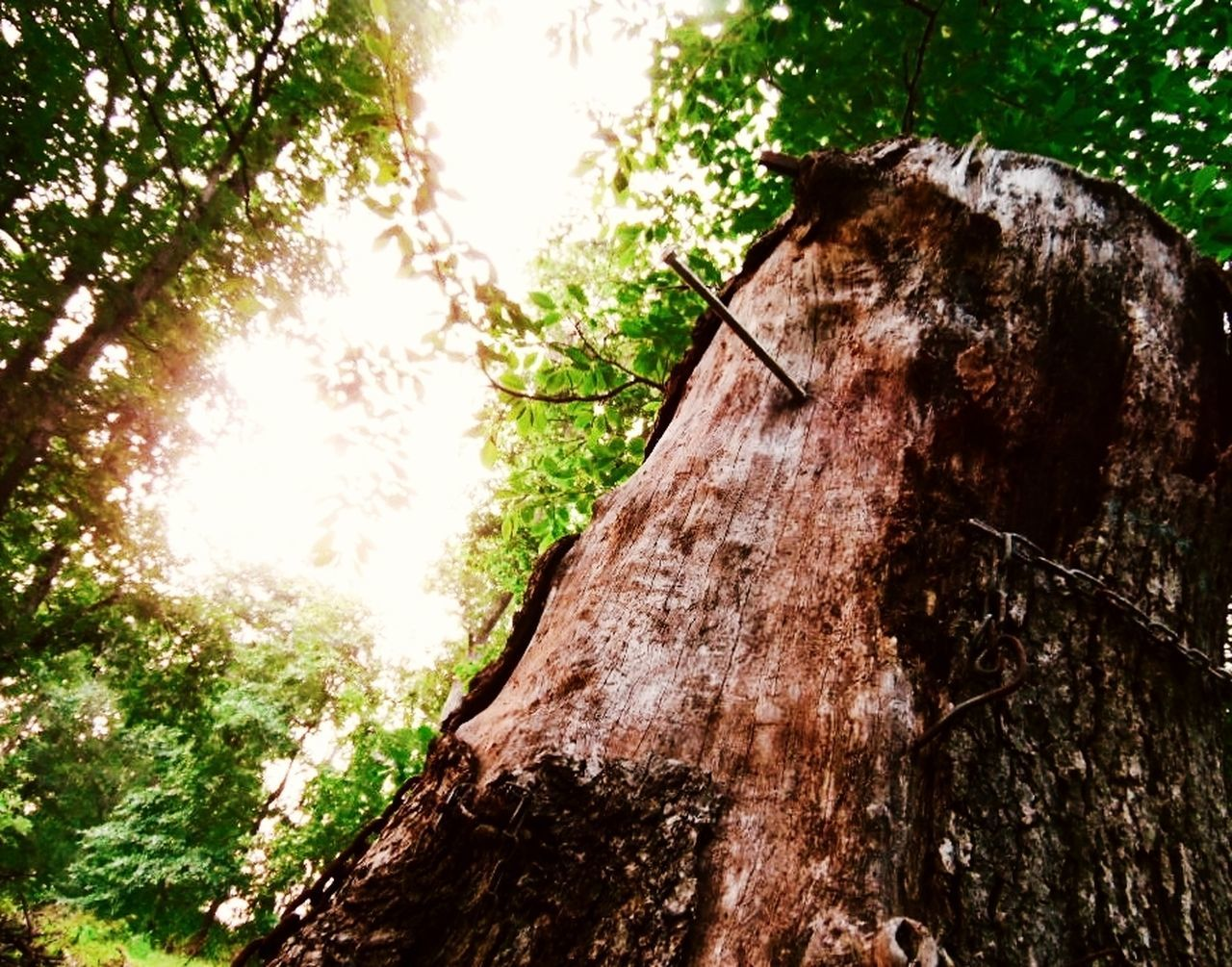 tree, tree trunk, wood - material, no people, deforestation, day, nature, lumber industry, log, tree stump, outdoors, low angle view, sunlight, branch, bark, forest, close-up, growth, dead tree, tree ring, axe, sky