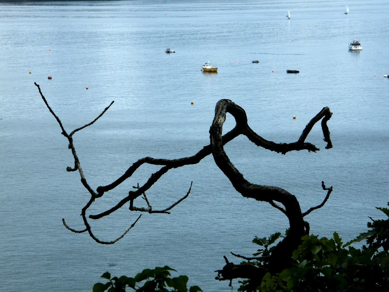 Beauty In Nature Day Lake Nature No People Outdoors Pembrokeshire Pembrokeshire Coast Pembrokeshire Coastal Path Saundersfoot Saundersfoot Harbour Scenics Seaside Tranquil Scene Tranquility Tree Water