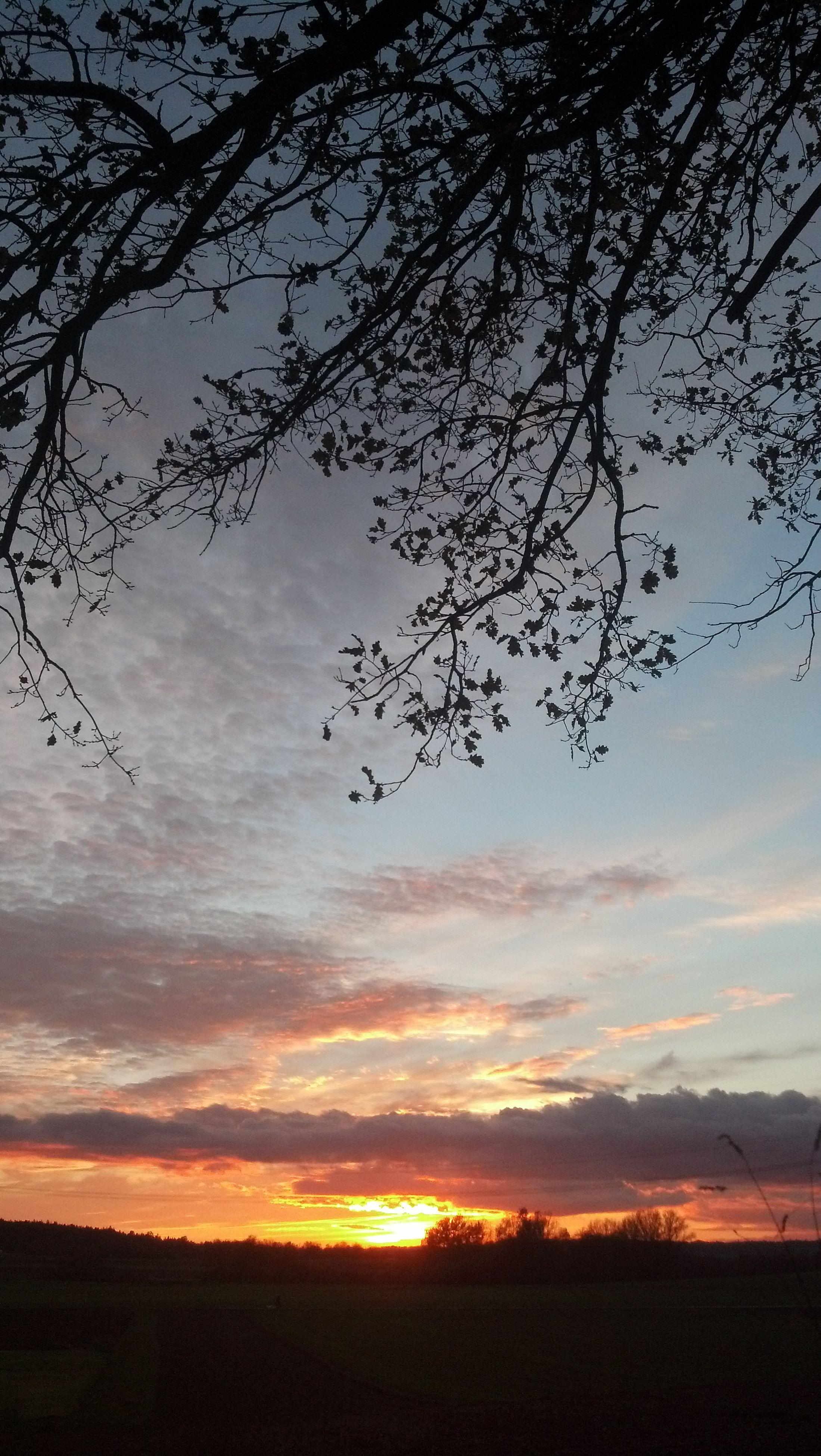 sunset, tranquil scene, tranquility, sky, scenics, landscape, silhouette, beauty in nature, field, nature, tree, cloud - sky, idyllic, bare tree, cloud, horizon over land, sun, non-urban scene, orange color, outdoors