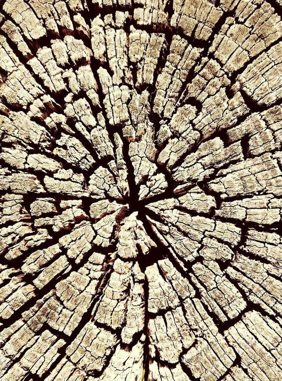 Broken wood People Watching