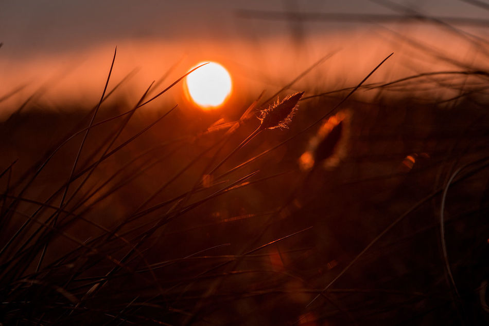 Abstract Art Art Background Beauty In Nature Close-up Conceptual Exceptional Photographs Grass Growth Melancholic Landscapes Miscellaneous  Nature Nature Art No People Other Outdoors Plant Scenics Sun Sunlight Sunrise Sunset Sunset Collection Tranquil Scene Tranquility