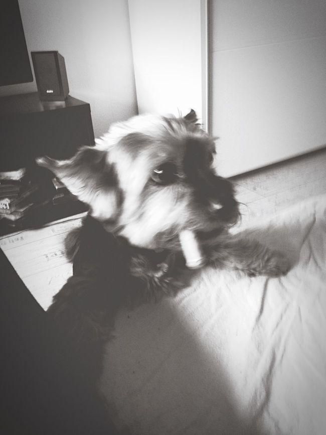 Dog Cute Stupid Love ❤️
