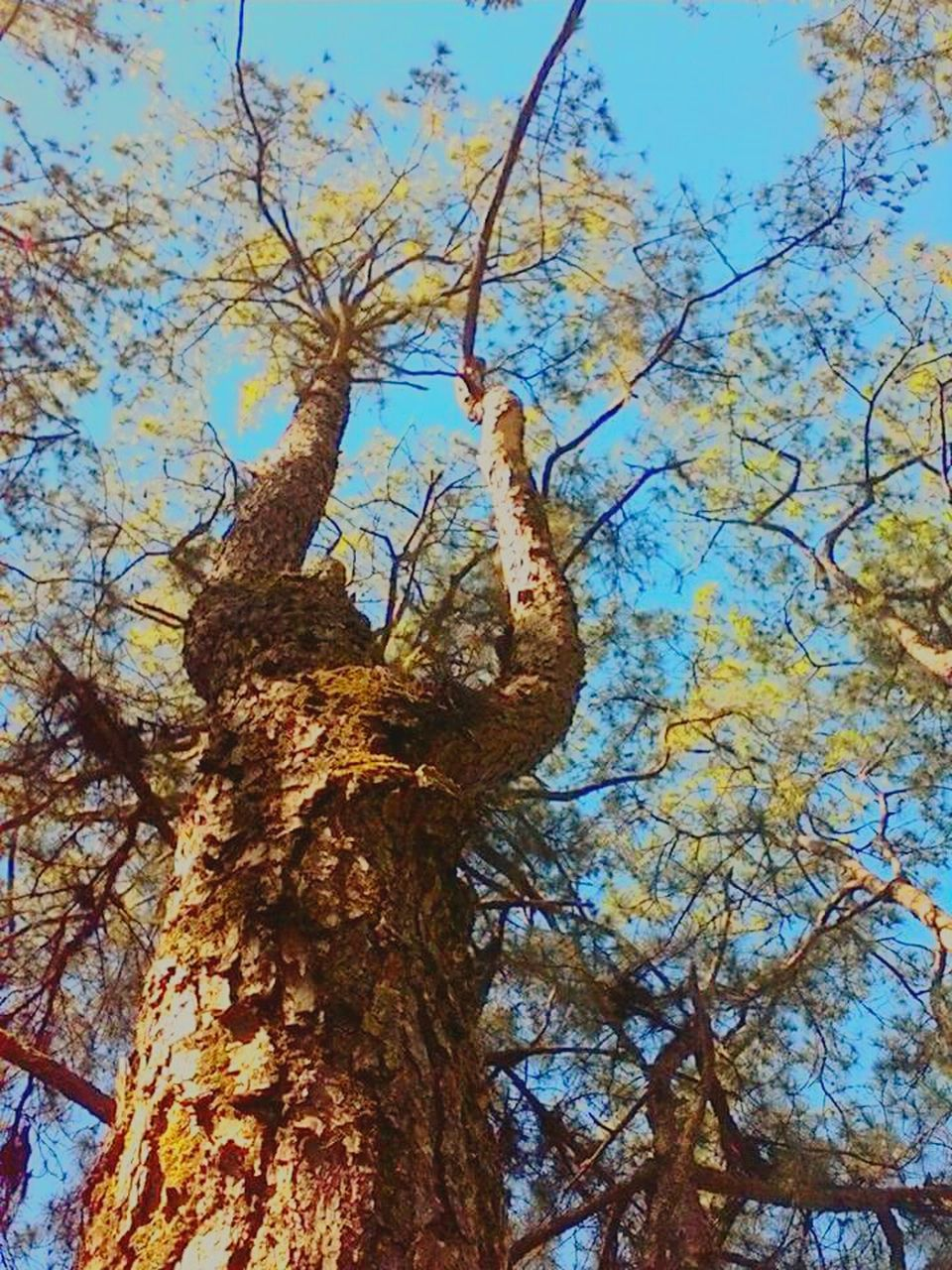 tree, tree trunk, low angle view, nature, growth, branch, day, beauty in nature, no people, outdoors, tranquility, sky, close-up