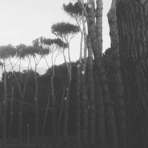 Dark Blackandwhite Growth Nature Outdoors Tree