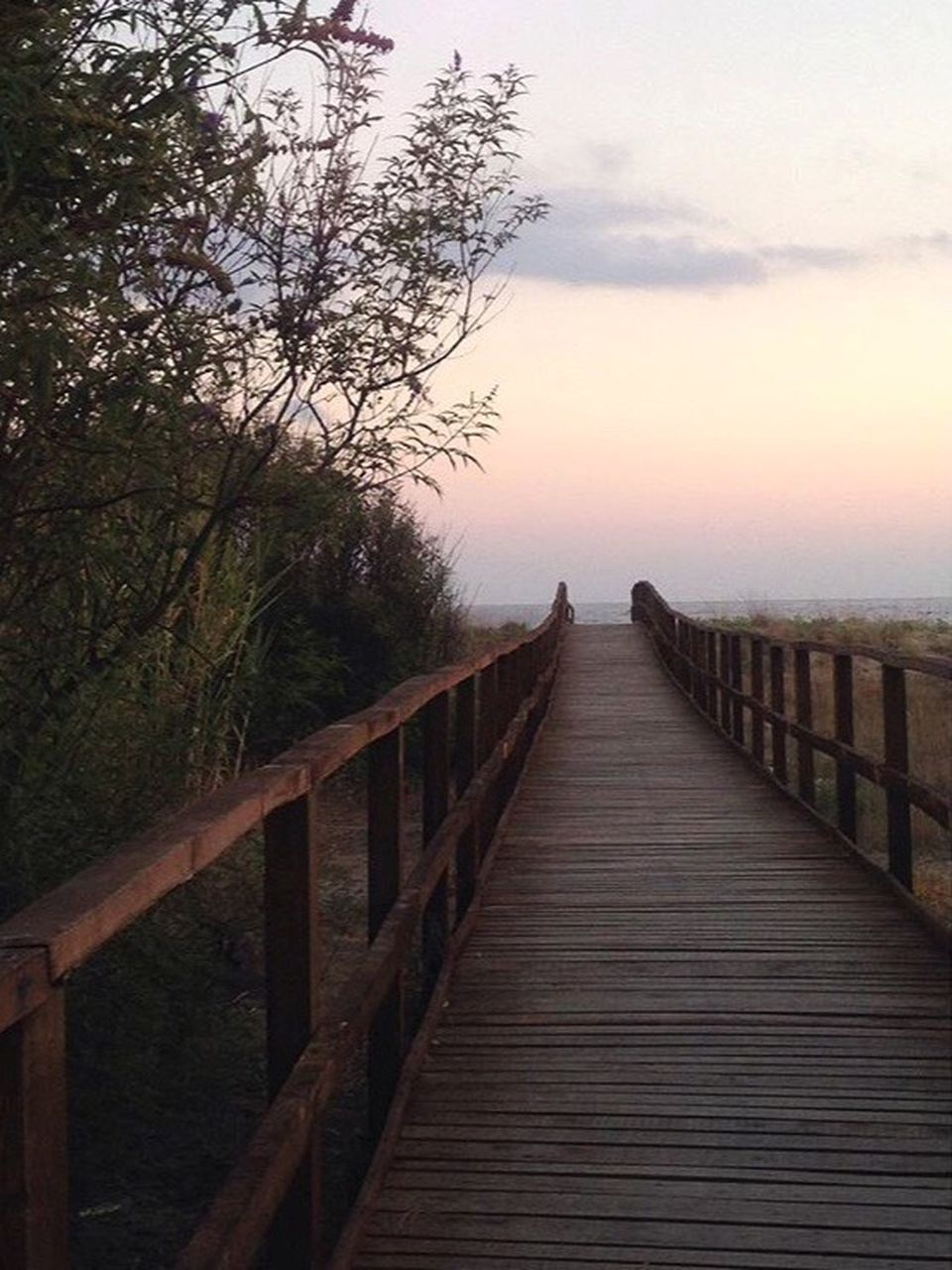 railing, wood - material, sunset, tree, tranquil scene, nature, the way forward, tranquility, beauty in nature, sky, wood paneling, outdoors, scenics, footbridge, no people, sea, water, day