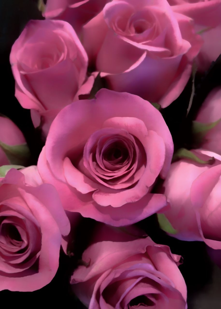 flower, rose - flower, petal, beauty in nature, fragility, flower head, nature, freshness, pink color, close-up, no people, plant, bouquet, growth, backgrounds, full frame, studio shot, outdoors, day, florist