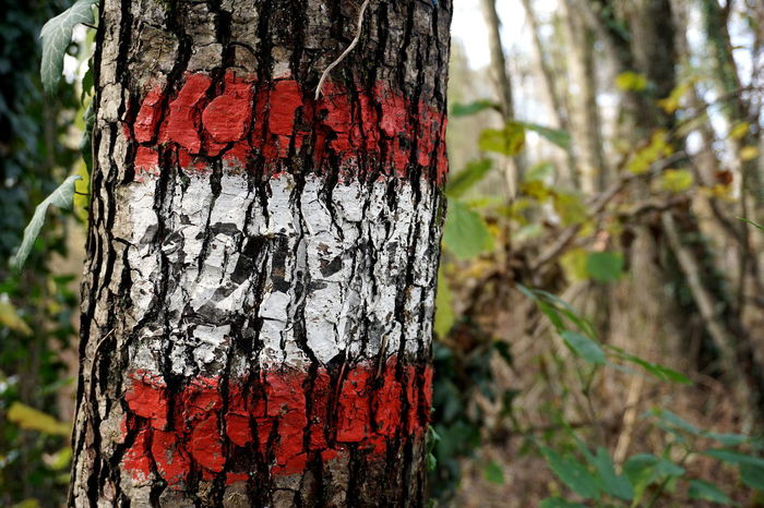 Austria Austrian Flag Bark Close-up Day Focus On Foreground Growth Marking Nature No People Outdoors Red Red White Red Rough Textured  Tree Tree Trunk Walking Route