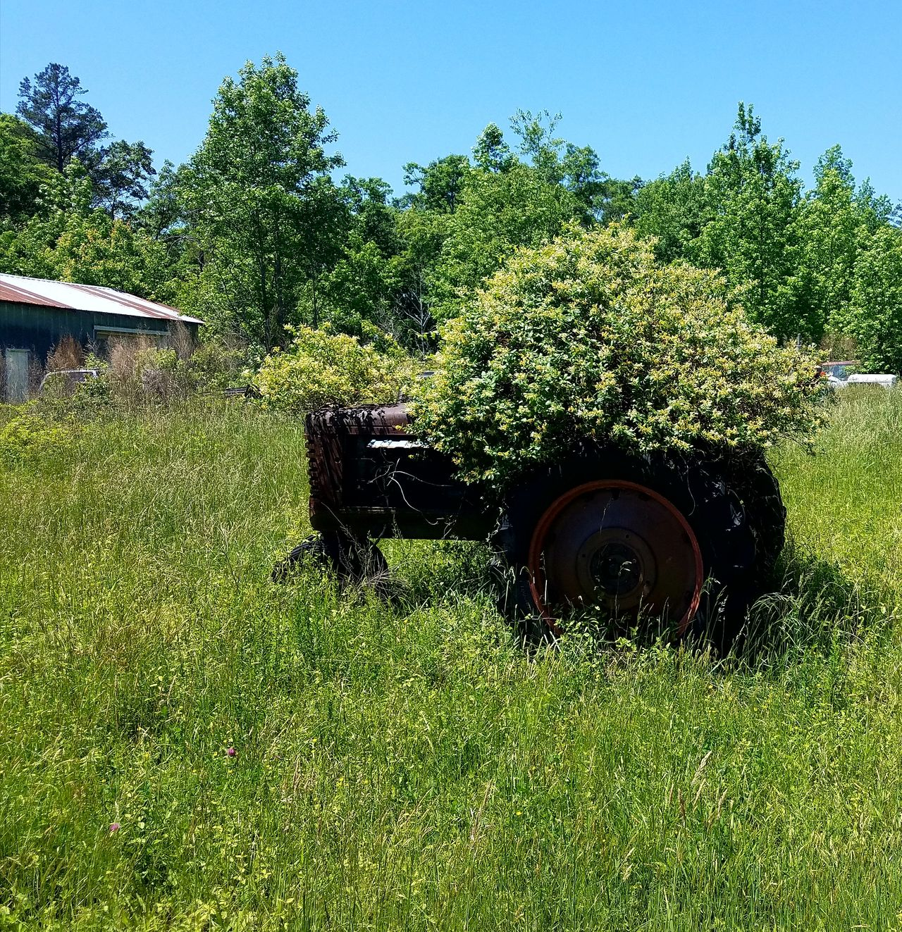 Grass Green Color Nature Day Growth Outdoors Tree No People Sky Rusty Metal Close-up Tractor Love The Great Outdoors With Adobe