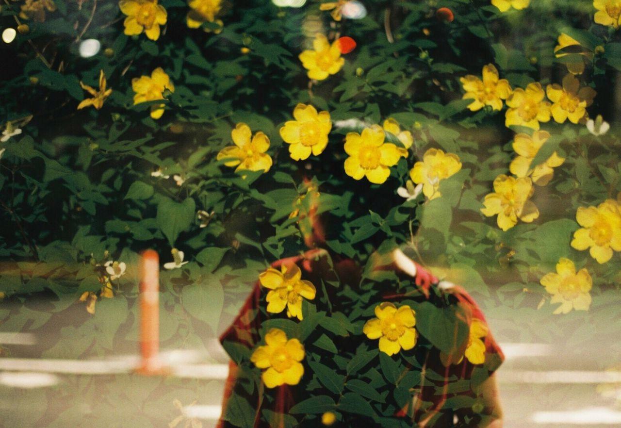 35mm Film Film Photography Flower Filmisnotdead Filmcamera Film