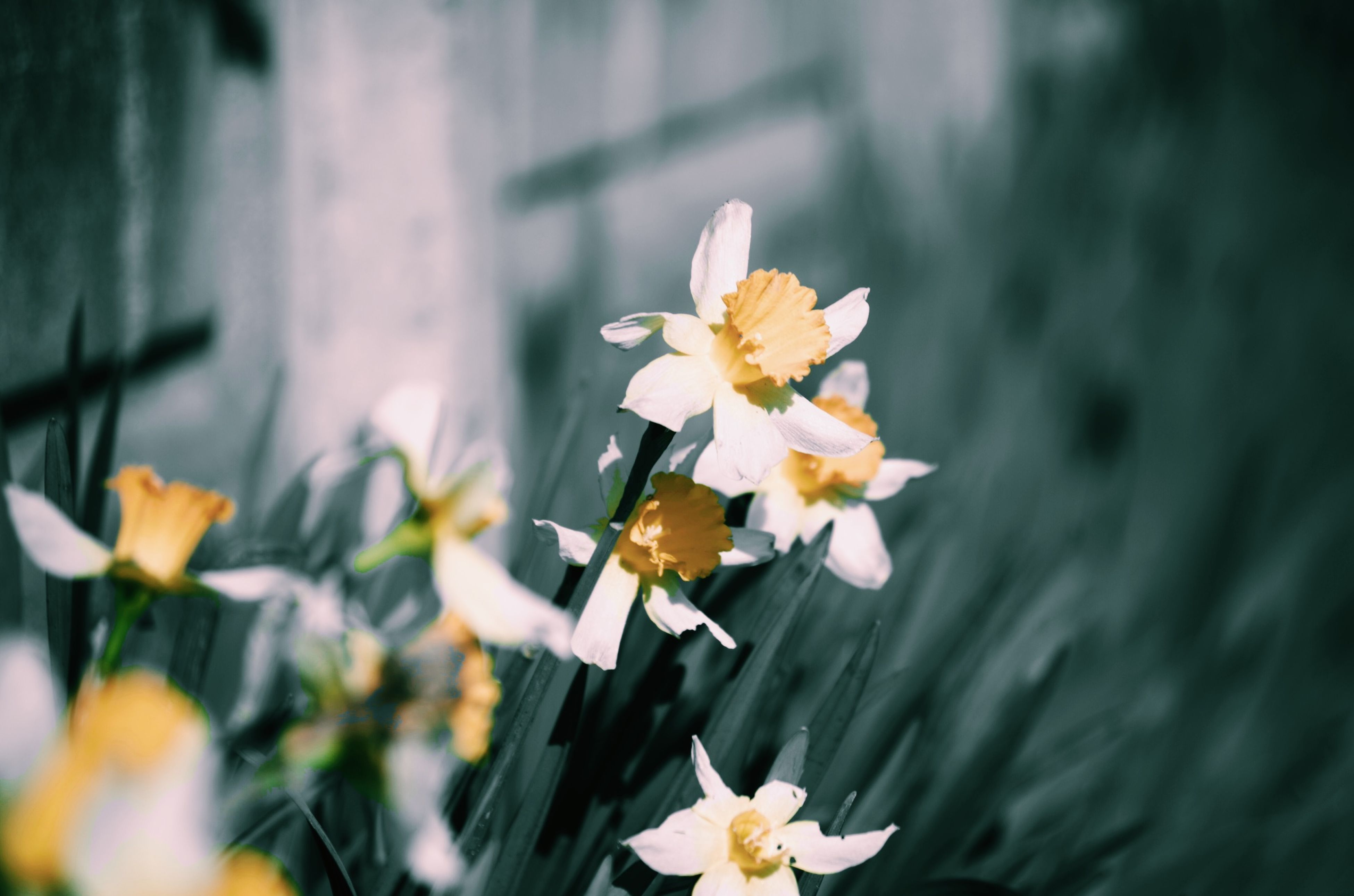 flower, petal, fragility, freshness, flower head, focus on foreground, white color, blooming, beauty in nature, growth, pollen, nature, close-up, stem, yellow, selective focus, in bloom, plant, day, blossom