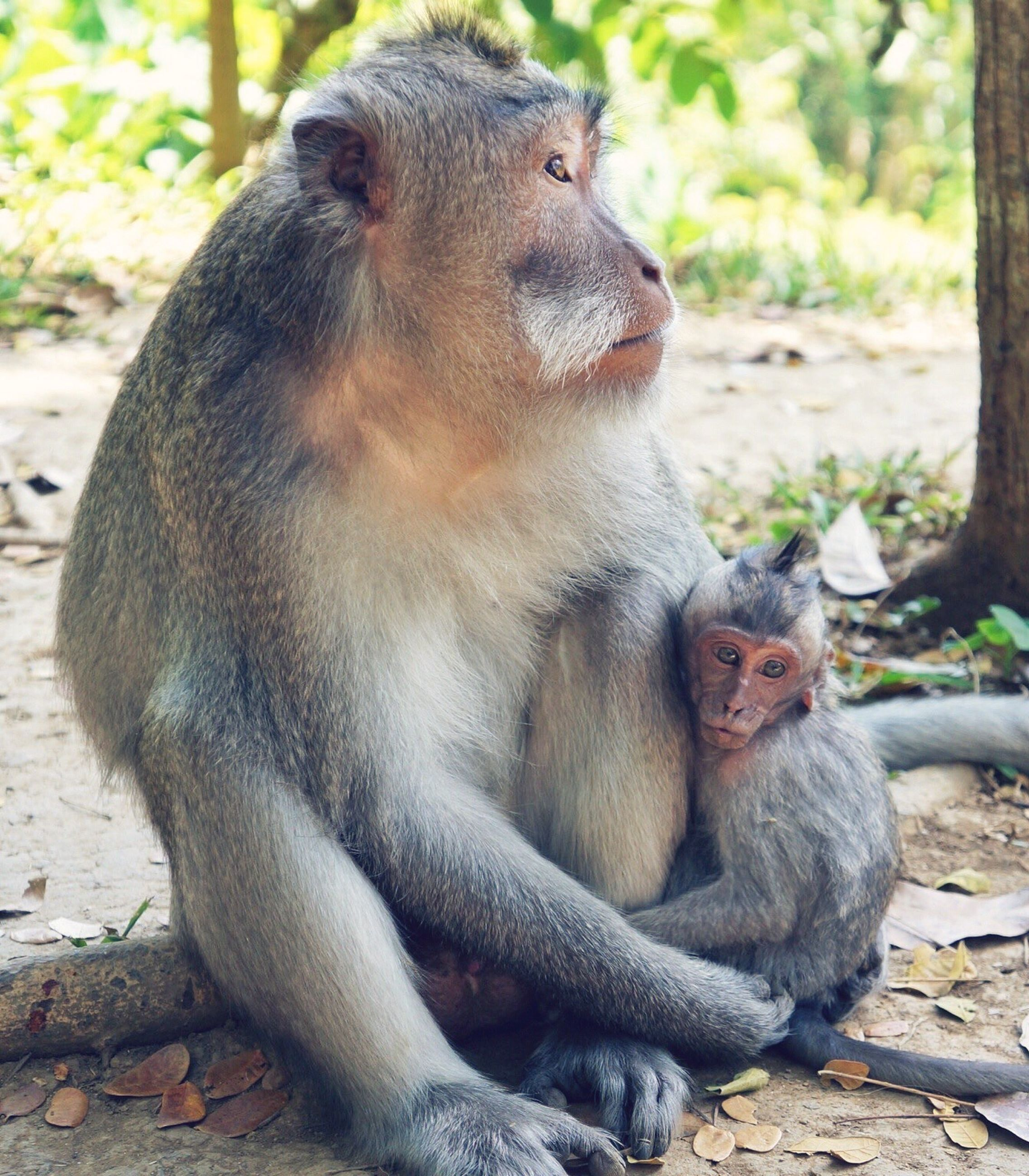 animal themes, animals in the wild, wildlife, monkey, primate, focus on foreground, one animal, mammal, two animals, sitting, zoo, close-up, togetherness, forest, animals in captivity, animal family, young animal, looking away, day