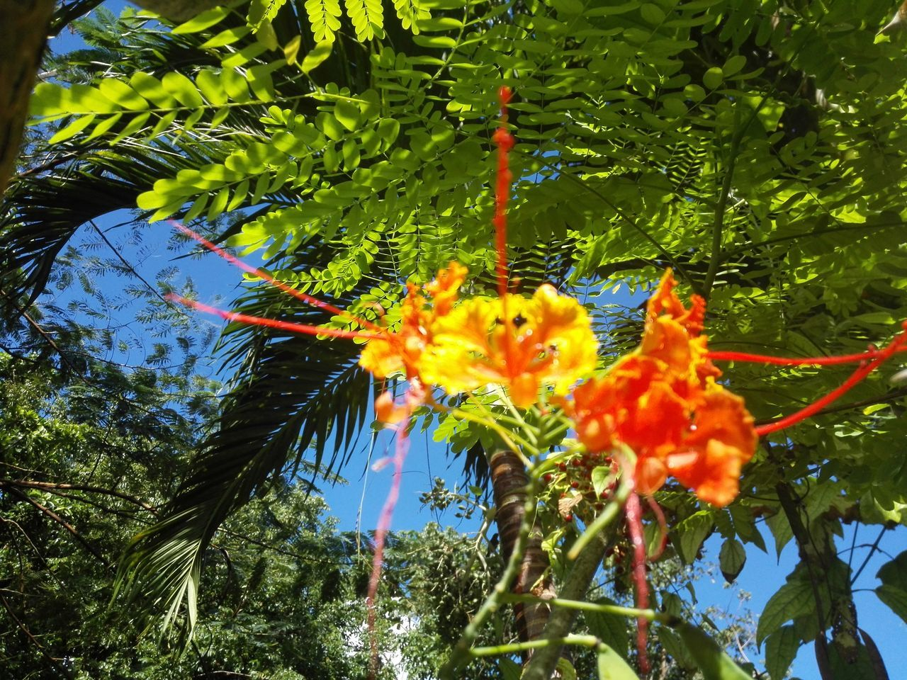 Flower Nature Beauty In Nature Plant Fragility Growth Tree No People Green Color Day Leaf Outdoors Blooming Freshness Close-up Sky Water Flower Head Soulfultography Eyemgallery Eyem Best Shot - My World Spiritualawakening