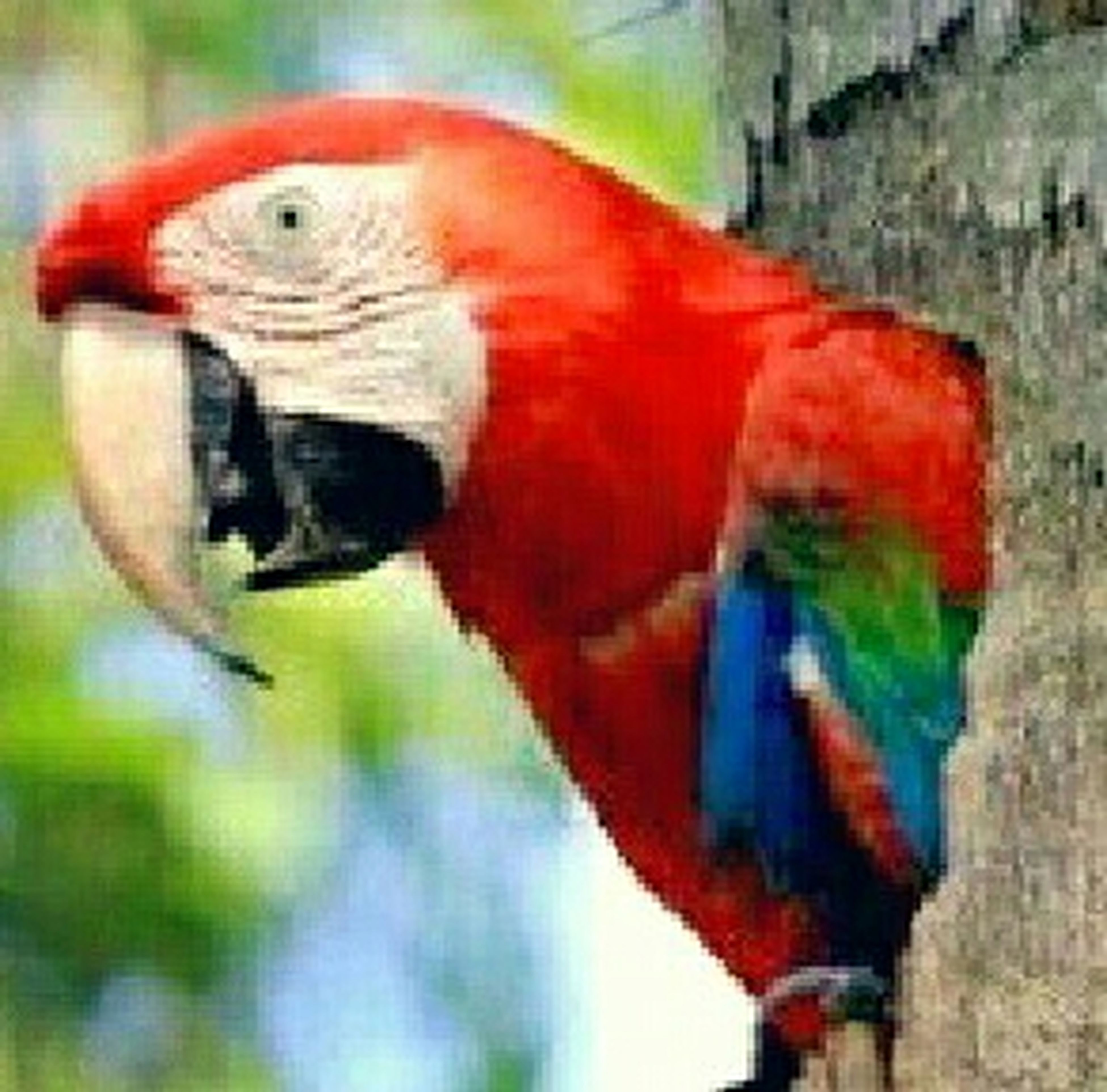 animal themes, bird, animals in the wild, wildlife, one animal, focus on foreground, close-up, parrot, red, multi colored, beak, day, animal head, outdoors, selective focus, two animals, perching, no people, portrait, side view