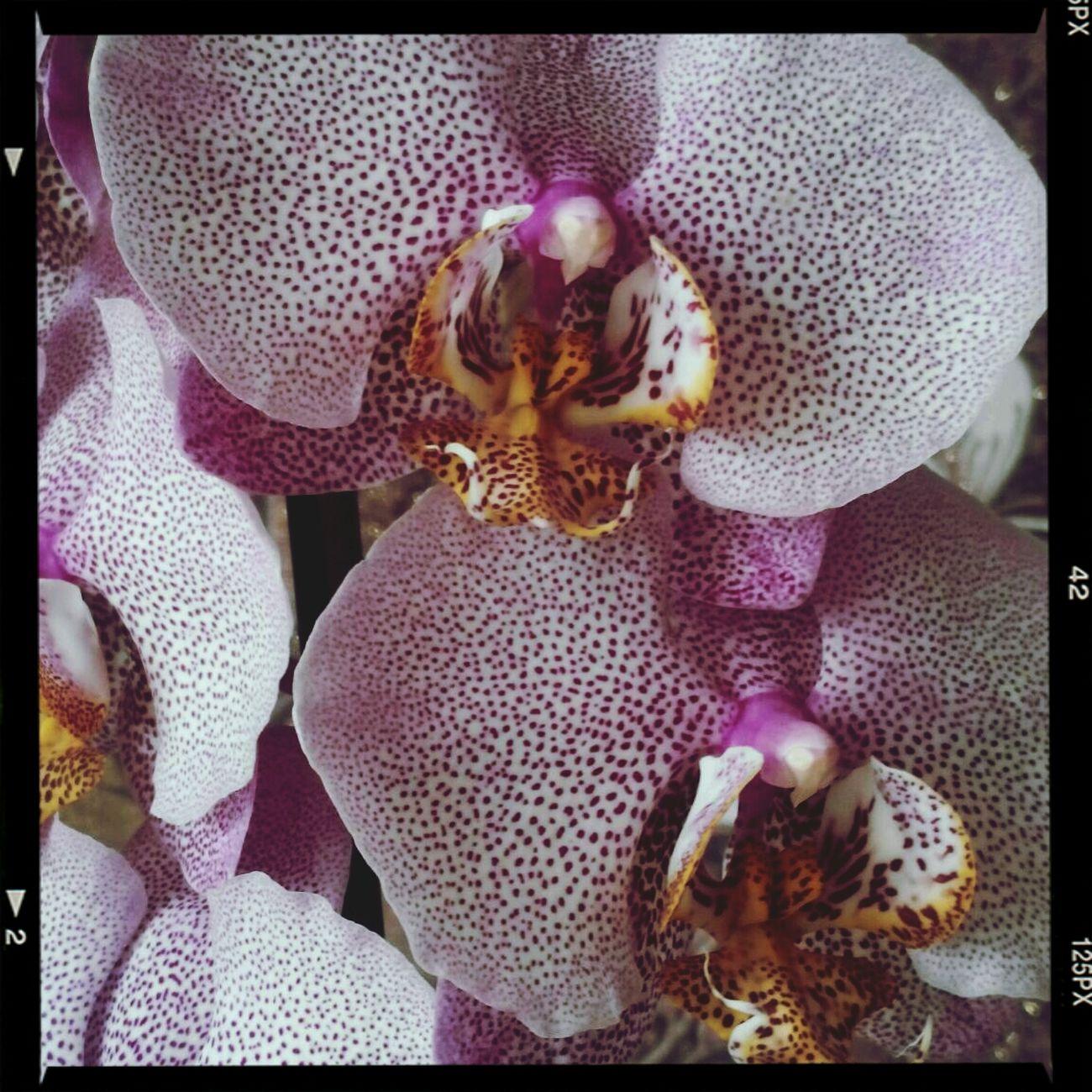 Orhideya Flowers
