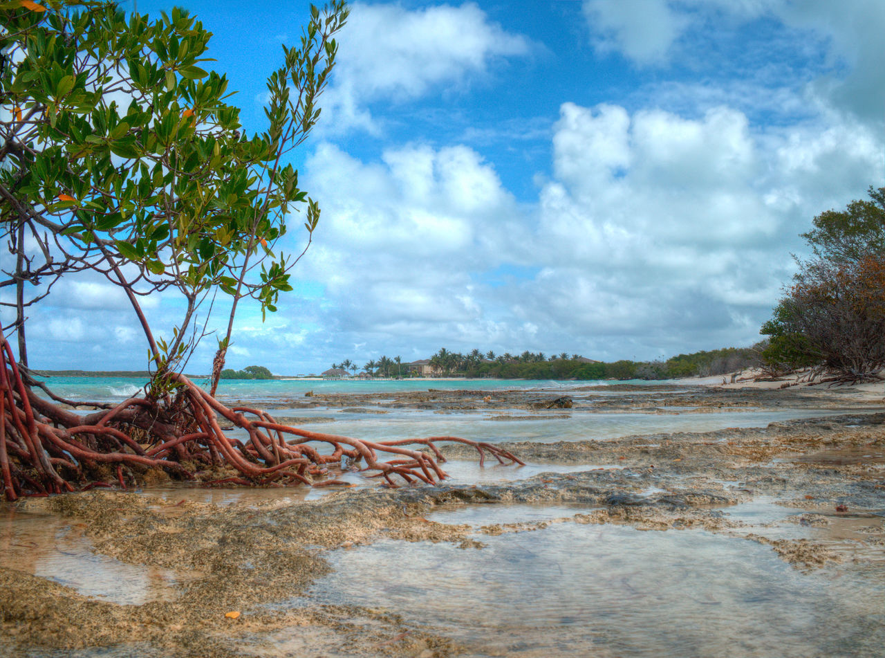 Resort View from the Mangroves Beach Beauty In Nature Cayo Santa Maria Cuba Day Growth Horizon Over Water Landscape Mangroves Nature No People Outdoors Sand Scenery Scenics Sea Sky Tranquil Scene Tranquility Tree Water
