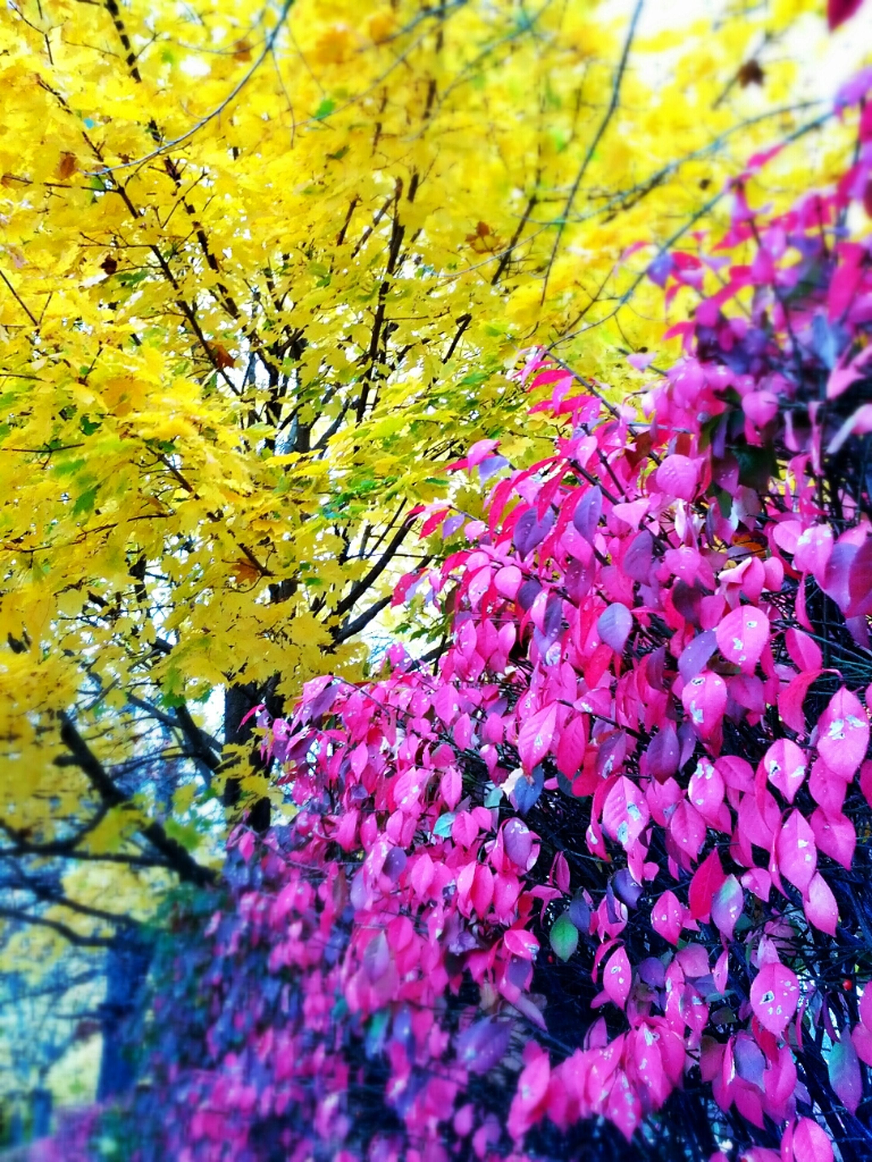 flower, freshness, fragility, growth, beauty in nature, leaf, nature, yellow, season, petal, branch, autumn, blossom, full frame, abundance, backgrounds, tree, change, multi colored, pink color