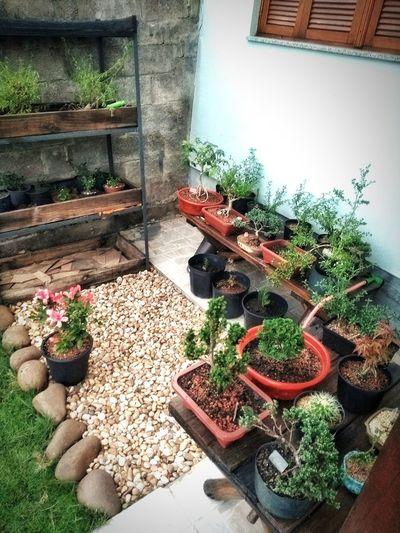 Potted Plant Outdoors Plant Nature No People Bonsai Bonsai Tree Bonsai In Training Plantas Jardins