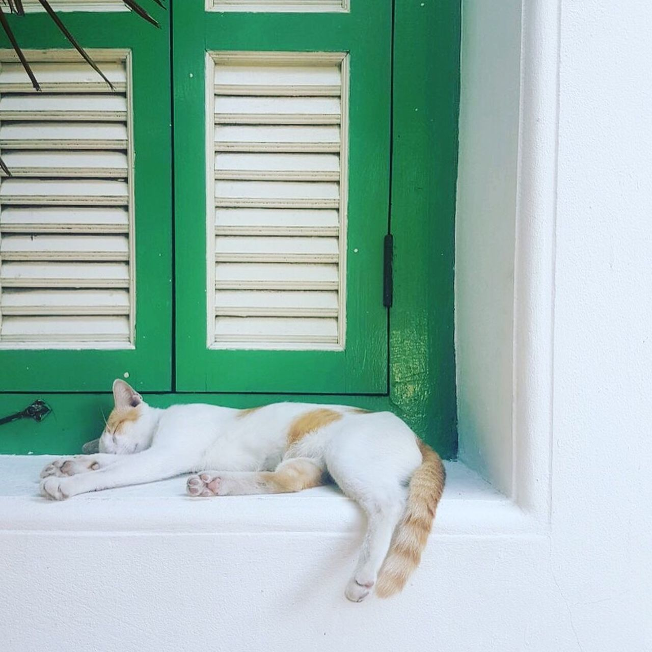 pets, one animal, white color, animal themes, mammal, domestic animals, sleeping, house, window, door, relaxation, dog, day, no people, domestic cat, indoors, architecture, full length
