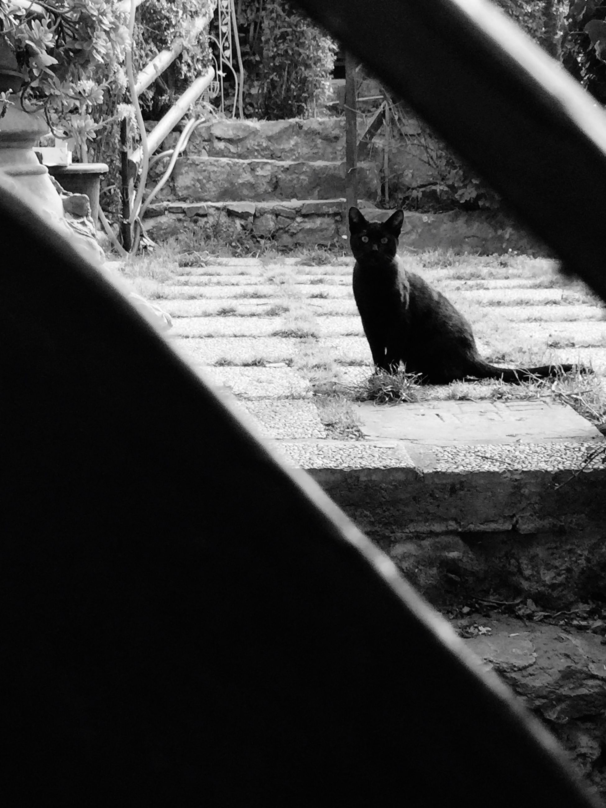 domestic animals, animal themes, mammal, one animal, pets, dog, domestic cat, sunlight, shadow, road, street, grass, cat, high angle view, outdoors, full length, day, transportation, tree, walking