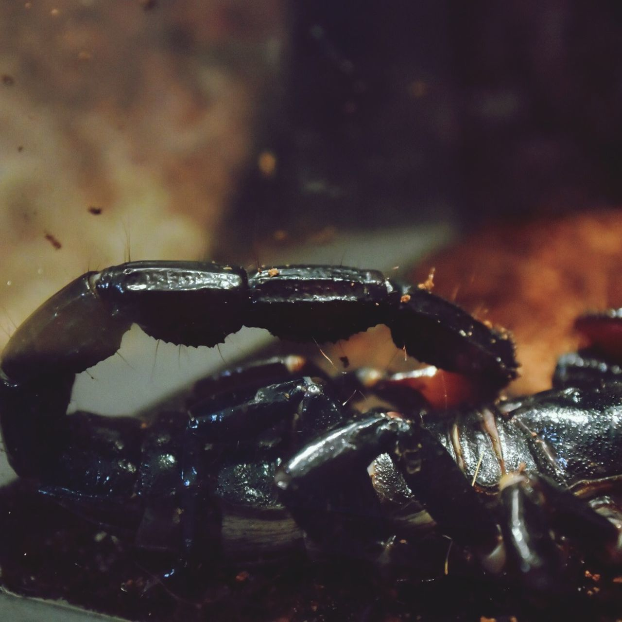 Beautiful stock photos of scorpion, Animal, Animal Leg, Animal Themes, Close-Up