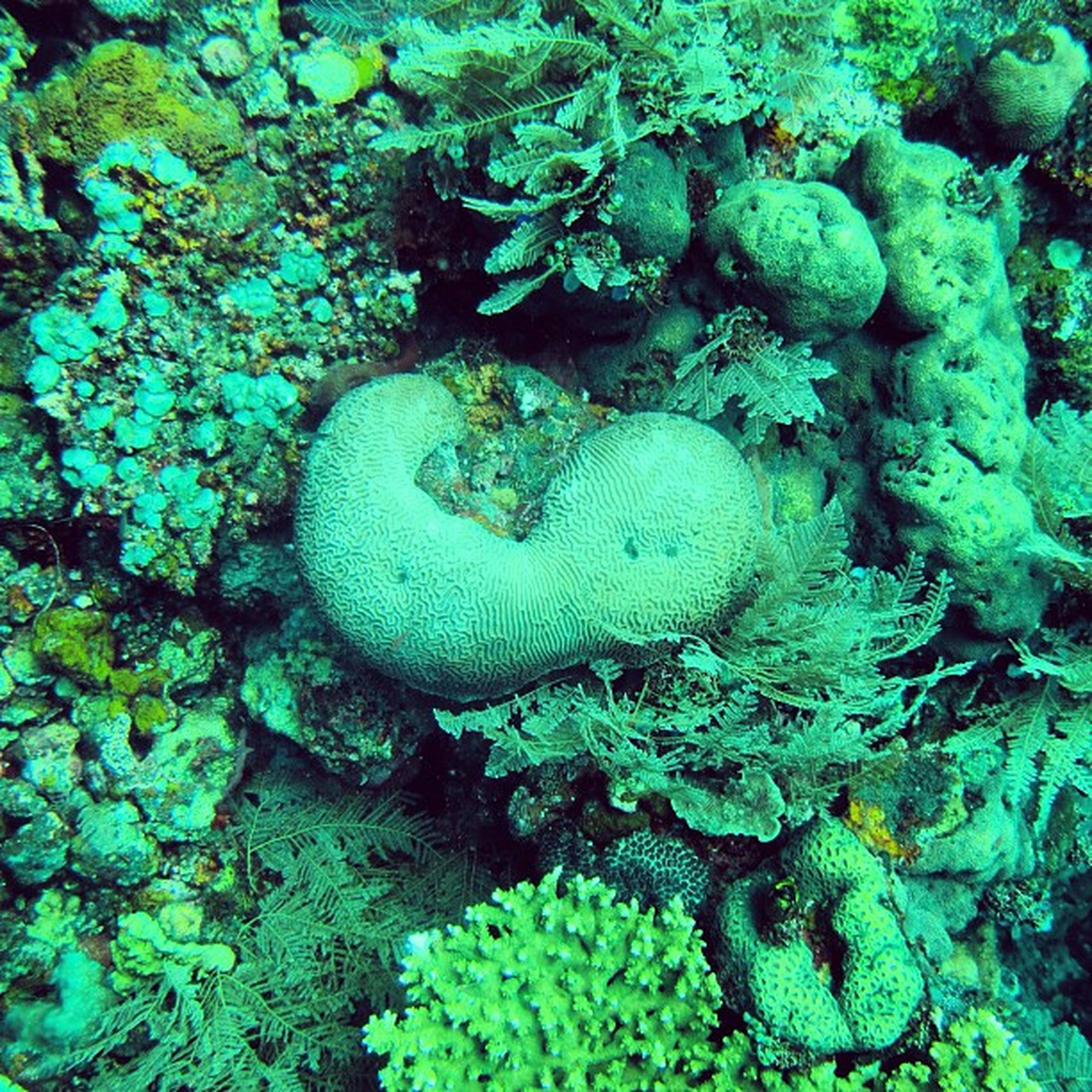 underwater, water, high angle view, green color, nature, sea life, fish, animal themes, freshness, close-up, beauty in nature, undersea, coral, rock - object, wildlife, no people, swimming, animals in the wild, vegetable, food and drink