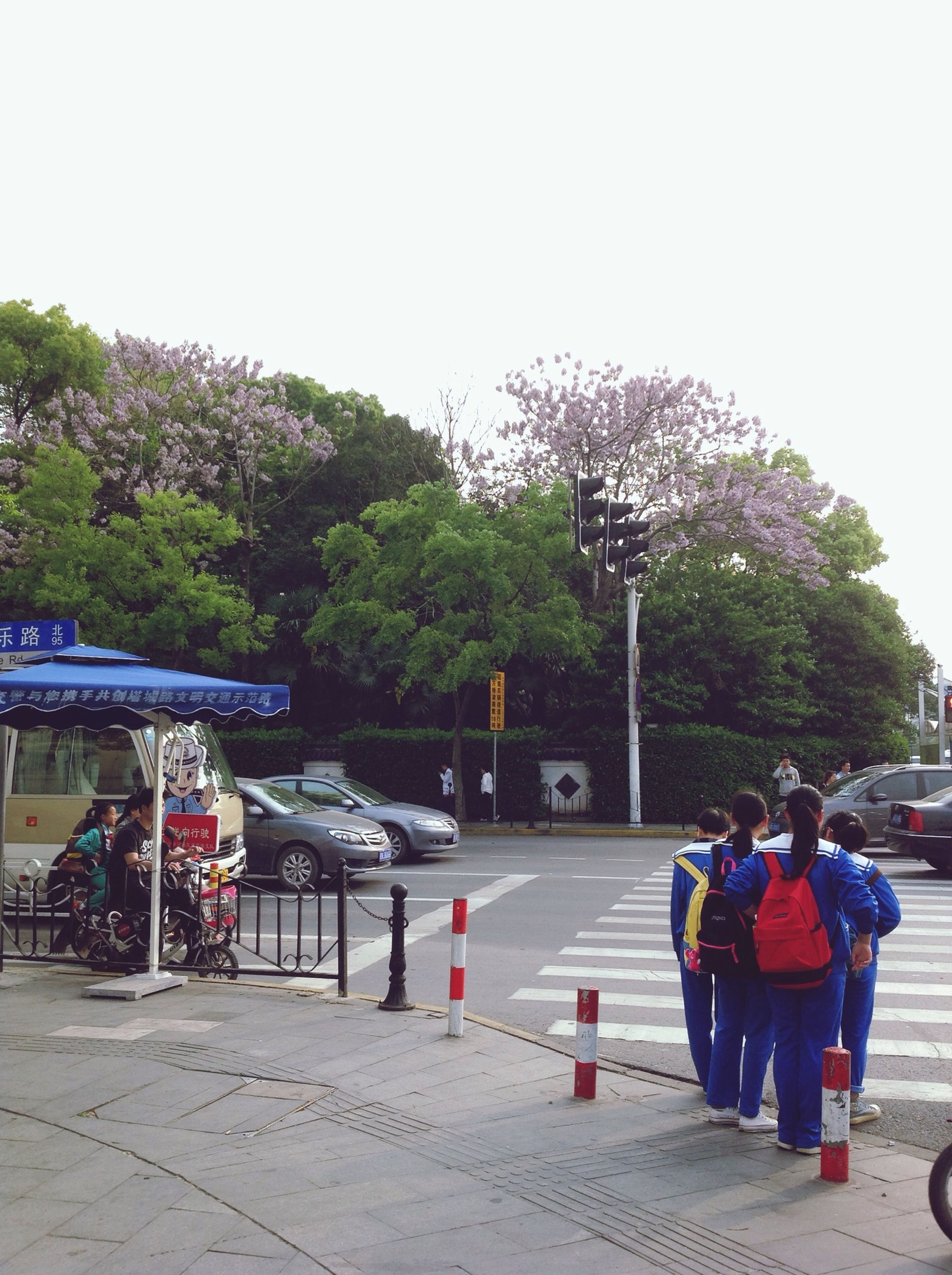tree, men, lifestyles, person, leisure activity, clear sky, transportation, street, walking, full length, mode of transport, large group of people, rear view, road, sitting, land vehicle, day, sky, casual clothing