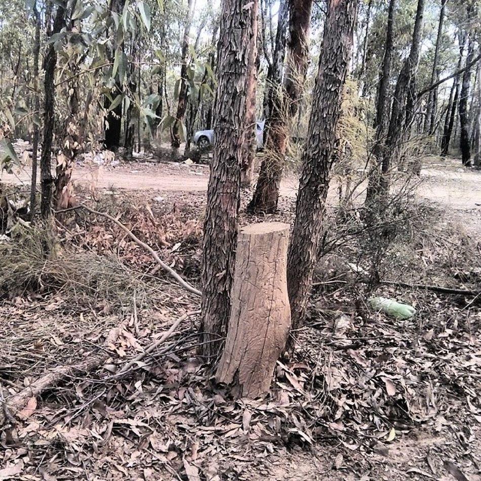 Theculprit Tree Ktm Crash