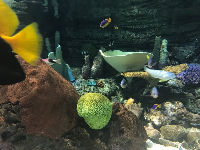 Fish Animal Themes Water Swimming Animals In The Wild Sea Life Underwater Large Group Of Animals Aquarium Nature No People Goldfish UnderSea Close-up Day Outdoors