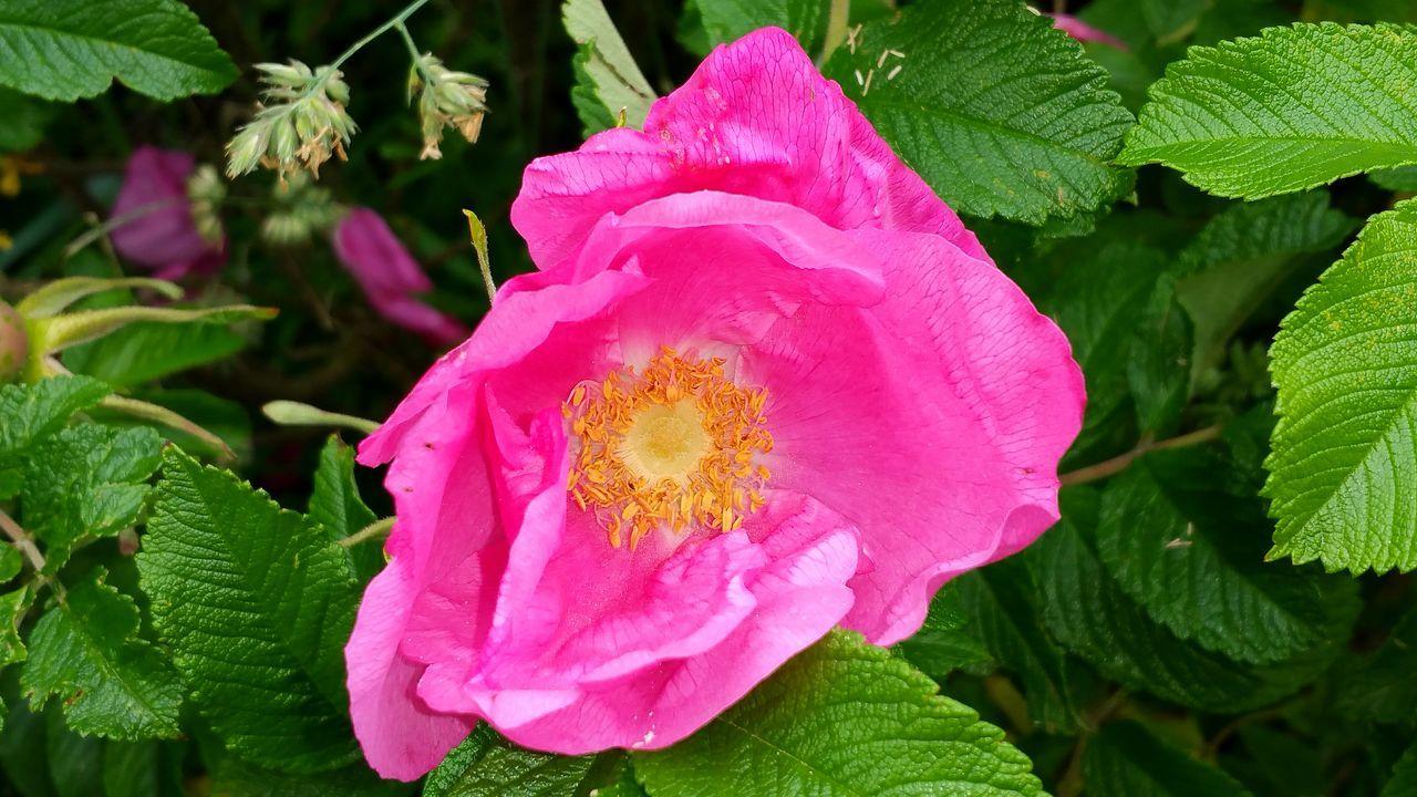 EyeEm Flower Lovers EyeEm Flower Walking Around Hollingworth Lake Pink Flower Pink Color EyeEm Flowers Collection