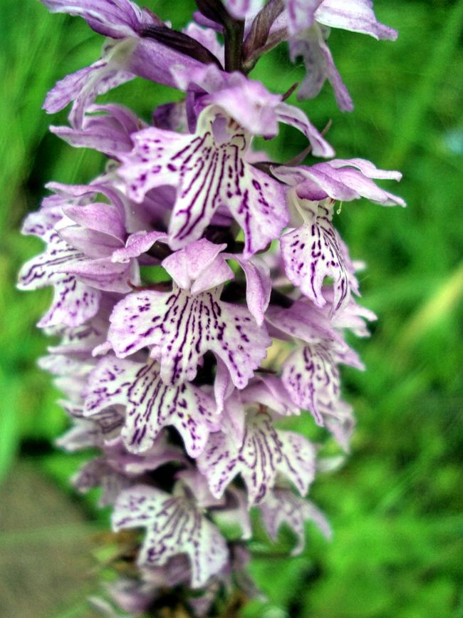 Flower Freshness Fragility Purple Growth Close-up Petal Beauty In Nature Pollination Nature Botany Wildlife Orchid Orchid Blossoms Orchid Flower Flower Head Plant In Bloom Focus On Foreground Blossom